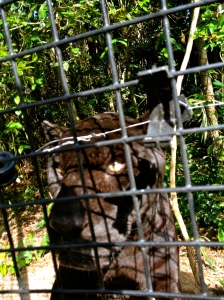 I was this close to a jaguar. No explanation needed.